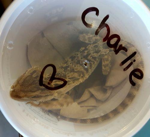 charlie-tub