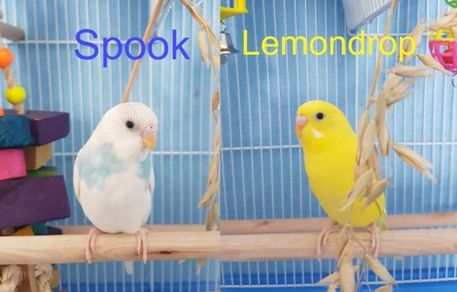 Spook & Lemon